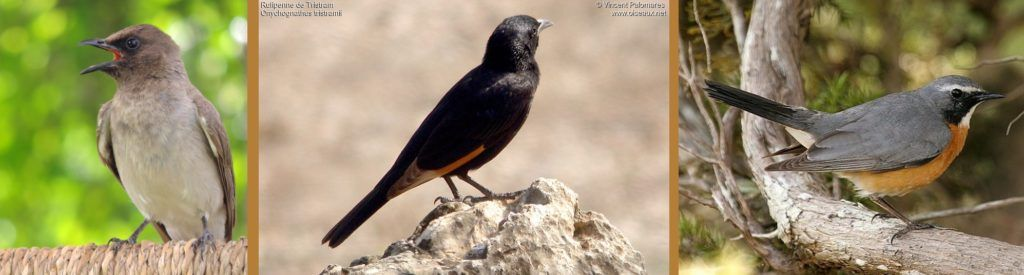 Messian usa no Livro principalmente pássaros do Oriente Médio, que Jesus poderia ter ouvido.